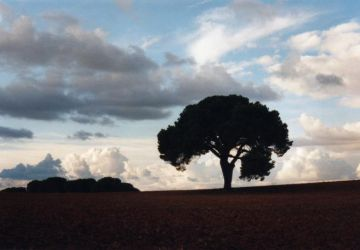 pino-lorito-anochecer