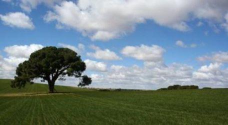 pino-lorito